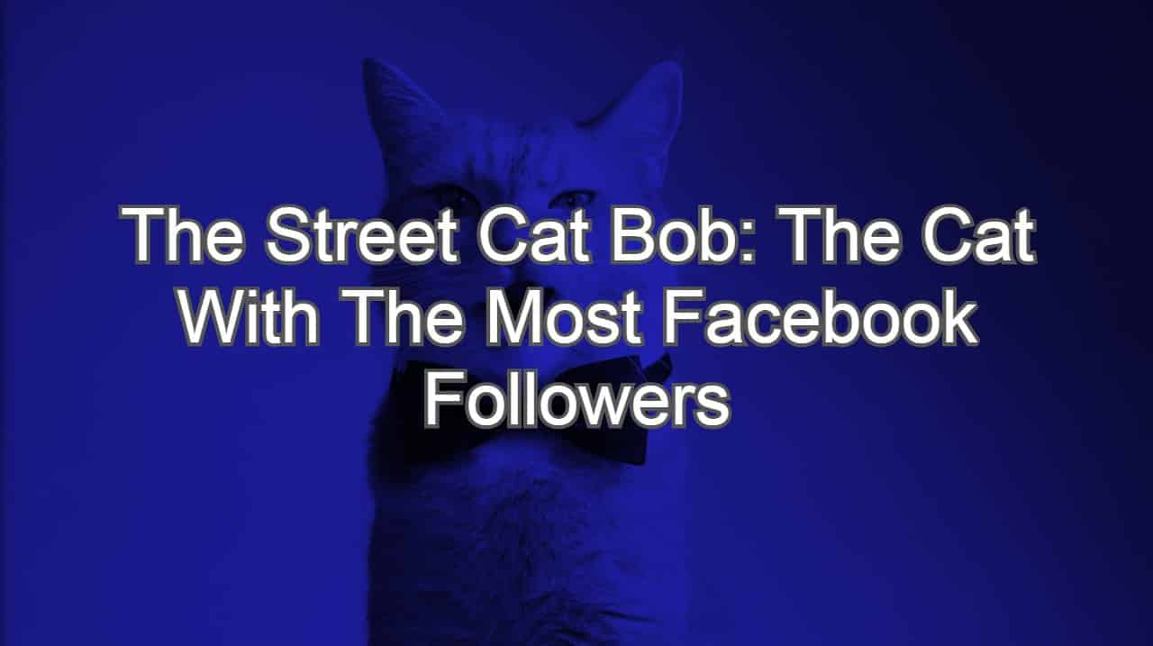 The Street Cat Bob: The Cat With The Most Facebook Followers